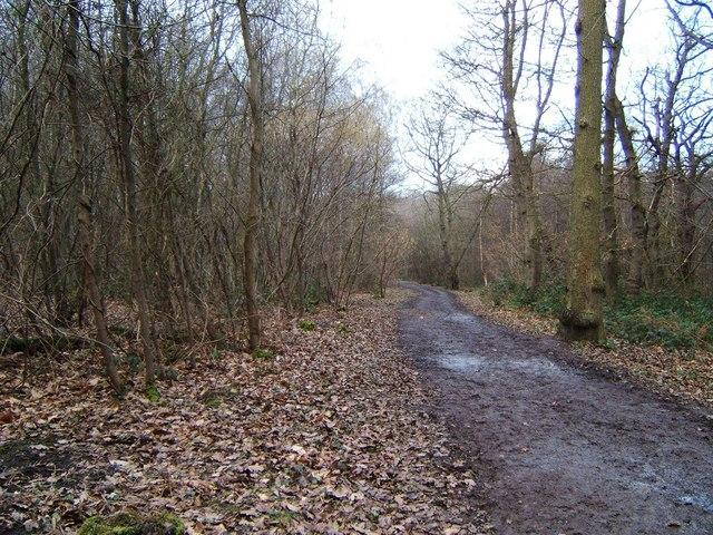 Hockley Wood