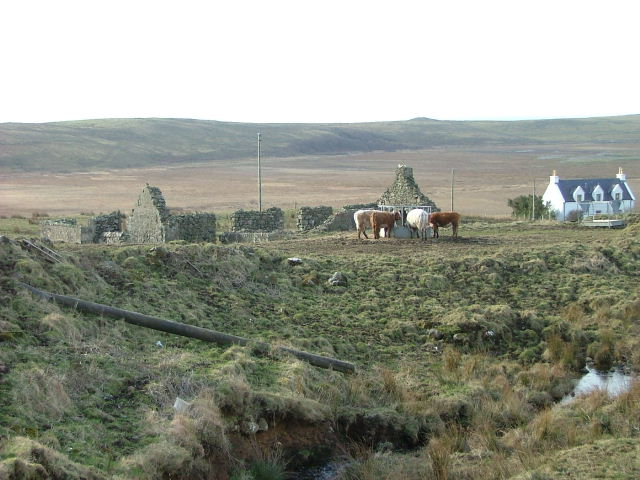 Ruined Croft House and Cattle
