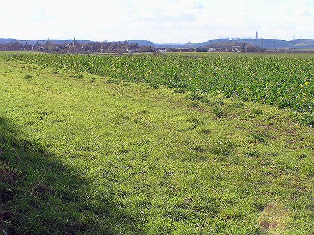 Looking across fields towards Bradmore