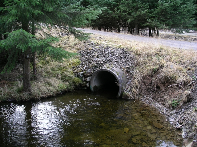 Culvert Bridge, Glentress Forest