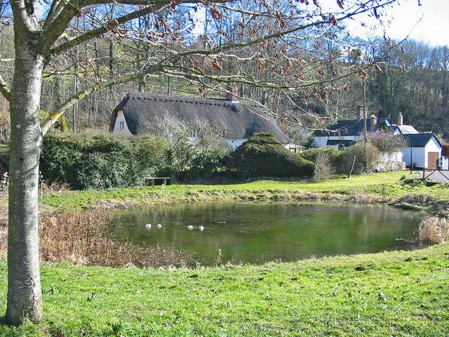 Village pond Tollard Royal Dorset