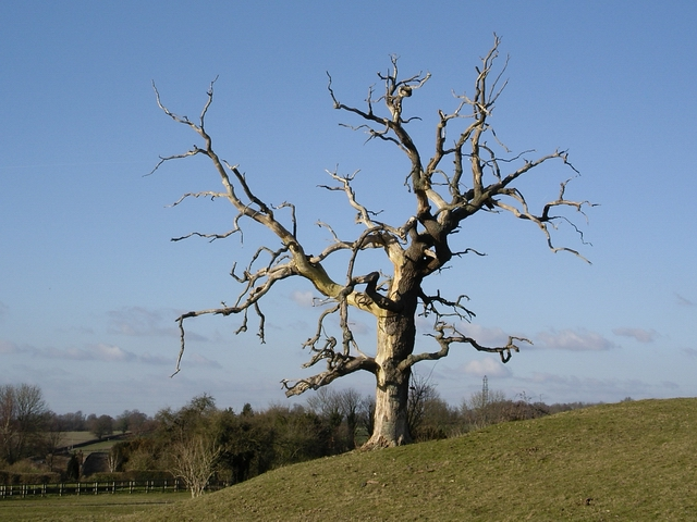 A stark tree, Cheriton