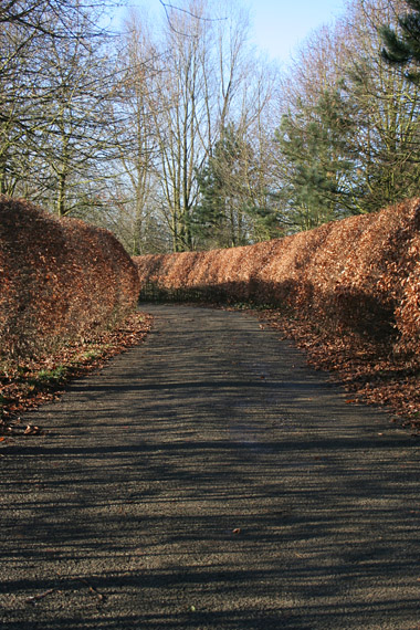 Beech Hedge, Wartnaby