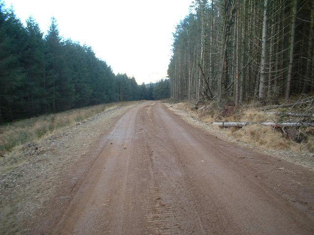 Watermeetings Forest