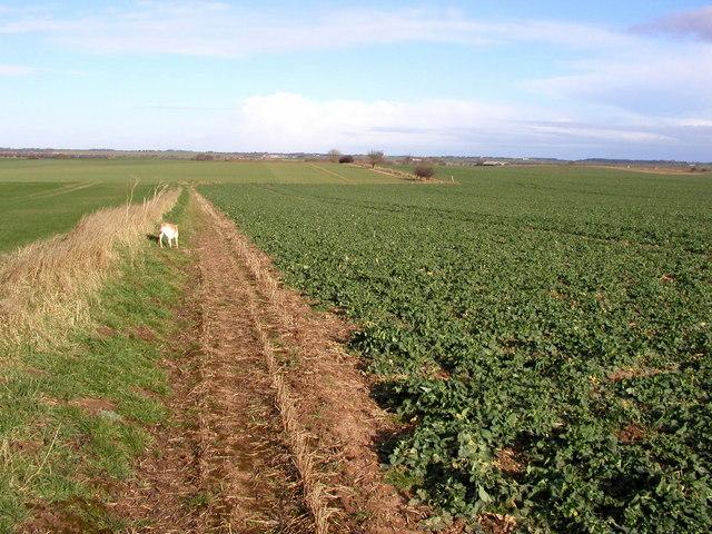 The Halsham to Burton Pidsea Footpath