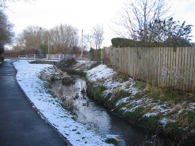 Ducks on Bitham Brook