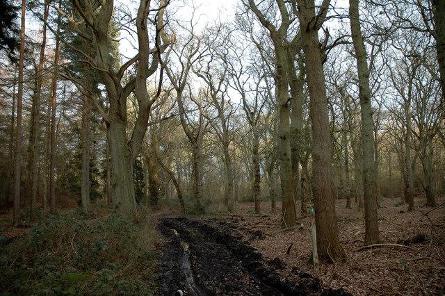 Track through Ken Hill Wood