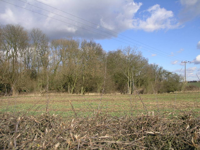 Copse by the Brook