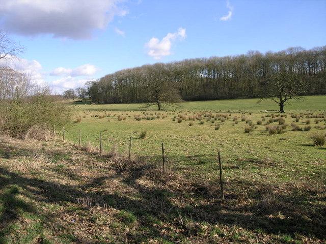 Catton Wood