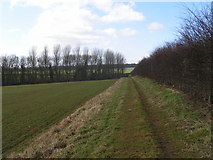SP6863 : Midshires Way, Yewtree Spinney by Dave Dunford