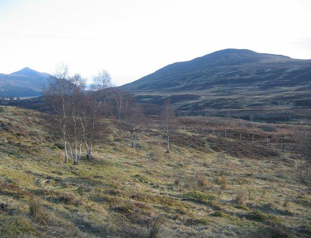 Birch woods, near the Raeburn Hut.