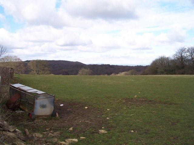 Cranham Wood