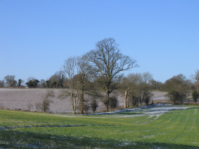 View from Cross Lane, Surlingham