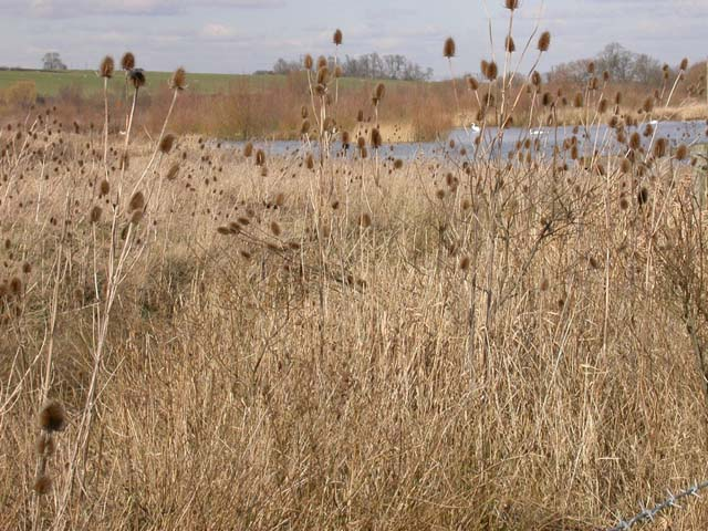 Summer Leys Nature Reserve