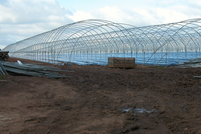 Poly tunnels, Between Fawley Cross and How Caple