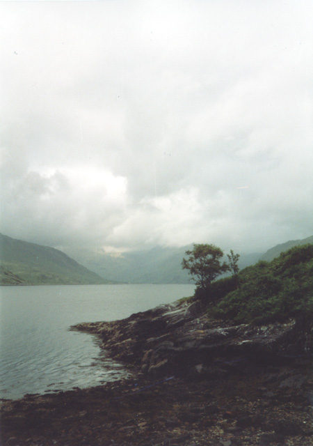 Lonely Tree on the shore of Loch Nevis