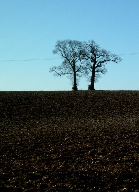 Two Trees, Harriott's End