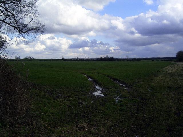 Fields between Bilstone & Twycross, Leics