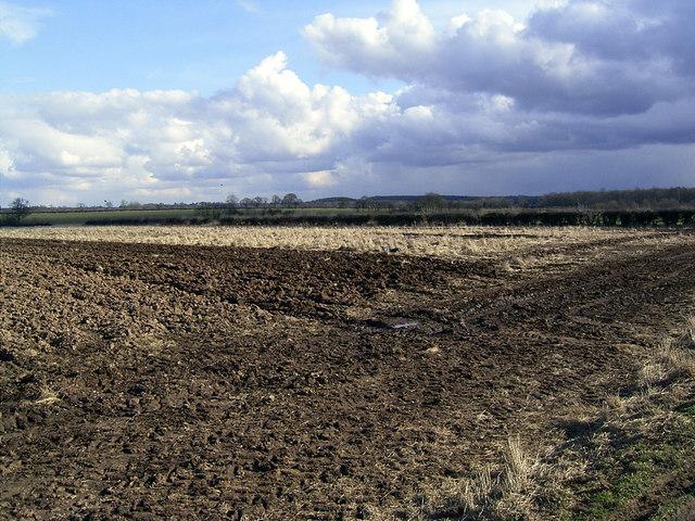 Fields at Shackerstone Fields Farm