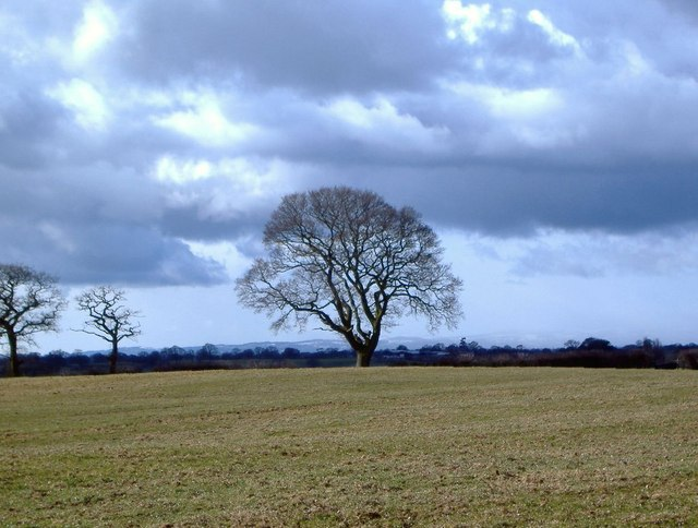 Oak tree and Welsh hills