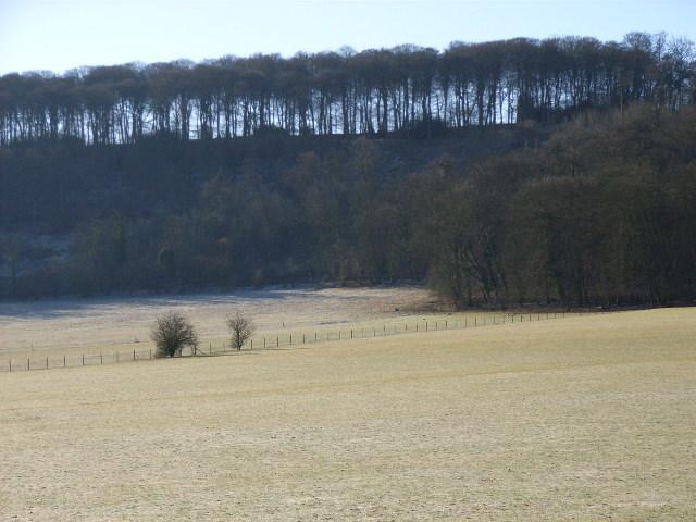 Idlecombe Wood