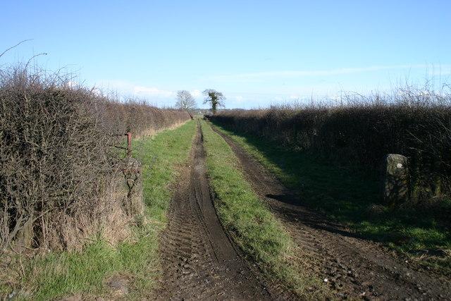 Track to Fields