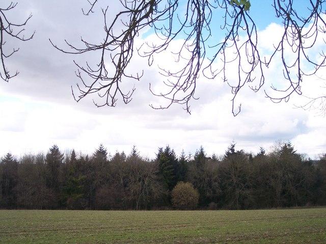 Westedge  wood near Rapsgate Park