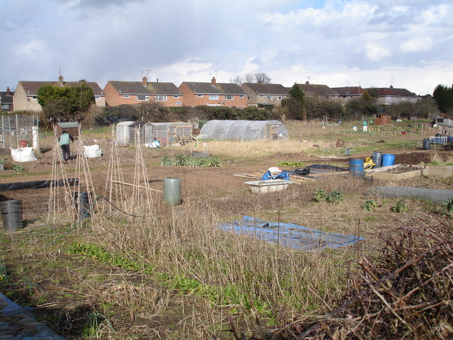 Allotment  gardens near Studley