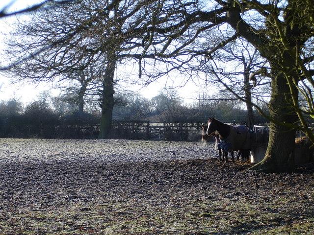 Early Winter Morning near Abbey Farm, Earlswood