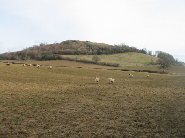 Allington Hill