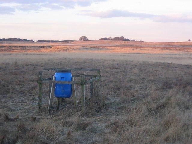 Pheasant feeder near Spurlens Rig