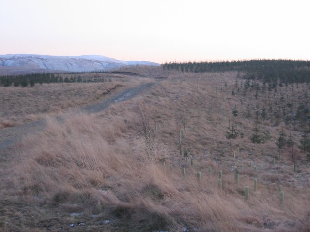 Forestry,Cockmuir