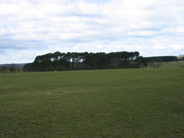 Plantation north west of Westerhaugh