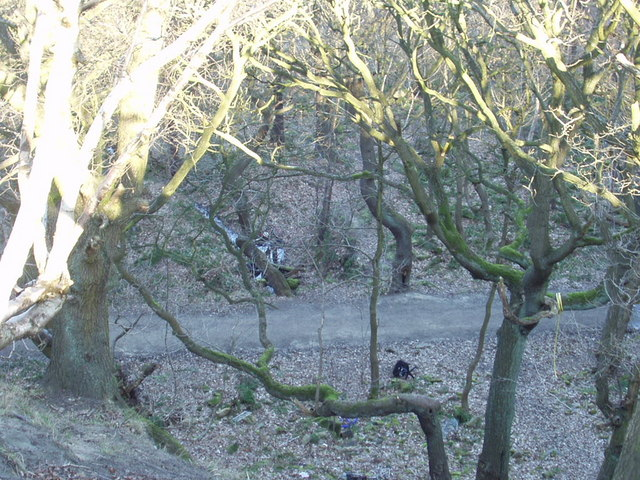 Looking down into Hawksworth Wood