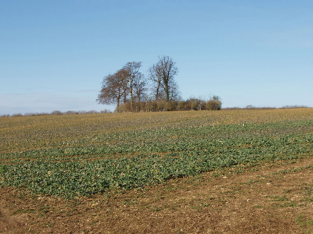 Field near Swinbrook