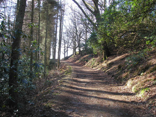 Woodland in Barbondale