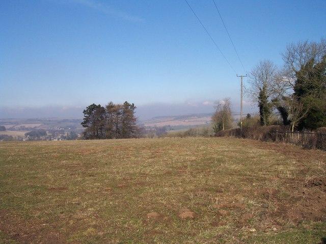 Tree Clump on Bubb's Hill