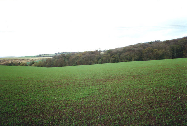 Fields and Woods, Glapwell, Derbyshire