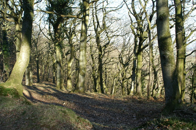 Woods on Quantock Common