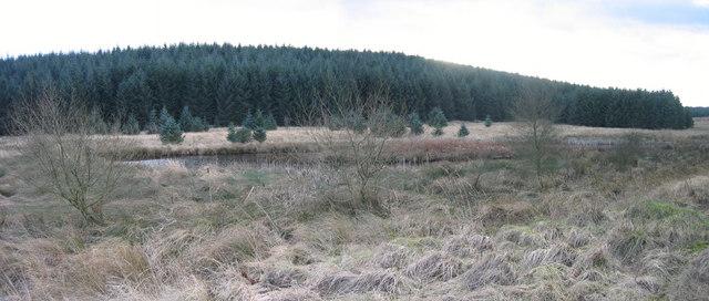 Decoy ponds in Wark Forest.