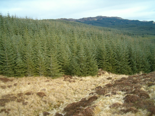 The edge of Inverleiver Forest