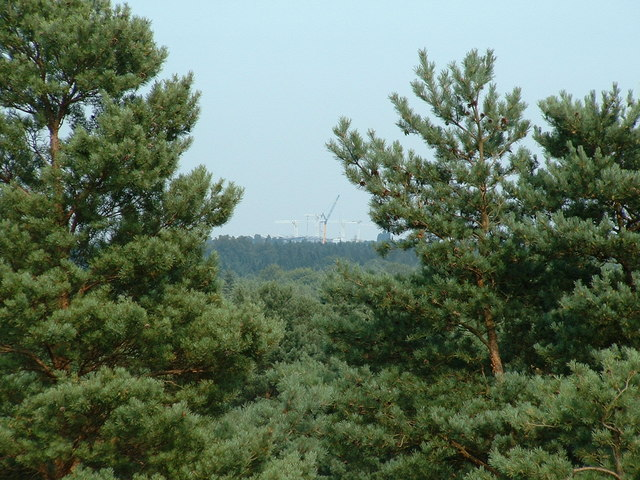 View across Bracknell Forest to the new stand at Ascot Racecourse