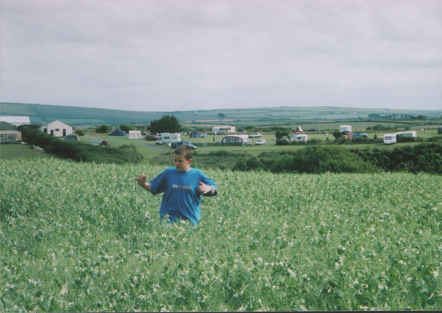 Pea field by Trerethern campsite