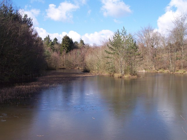 Reflections in Ice, Dymock Forest.