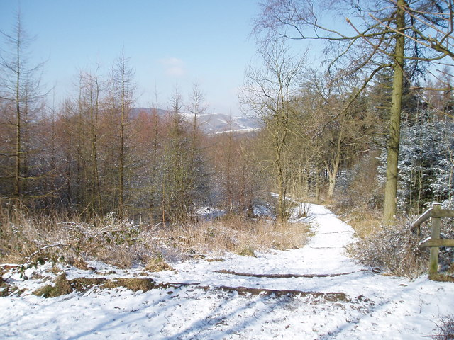 Footpath through Macclesfield forest