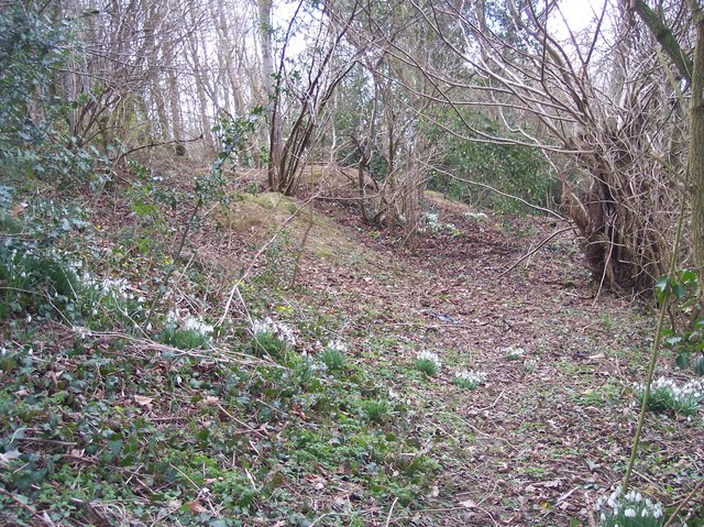 Snowdrops and Celandines on Footpath