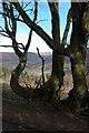 SO2922 : Tree near Pen-y-ffordd, Black Mountains by Philip Halling