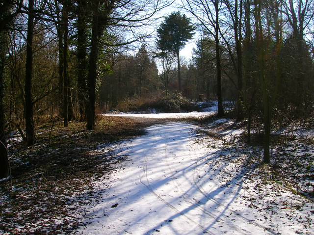 Friston Forest near Exceat