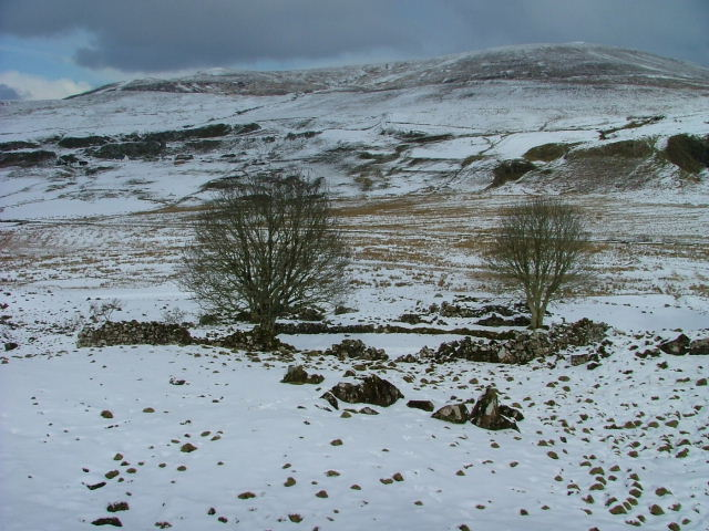 Drystane Enclosure and Trees in March