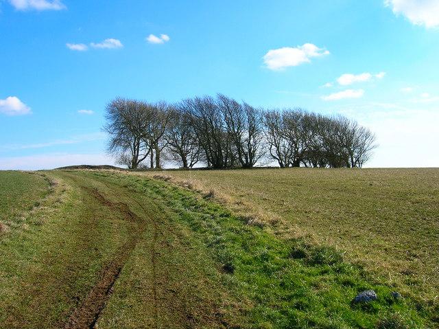 Willingdon Hill